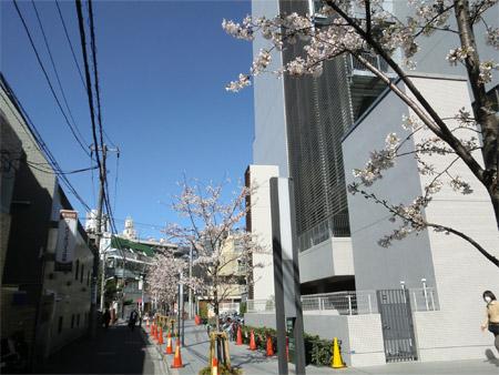 20130321sakura_b.jpg