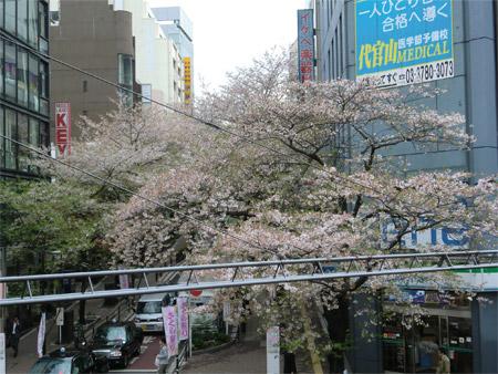 20130404sakura_b.jpg